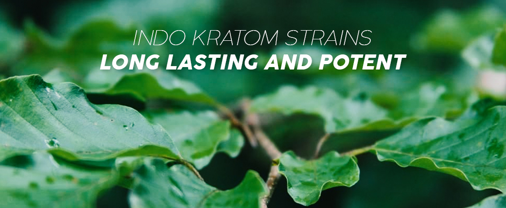 HOW-IS-INDO-KRATOM-STRAINS-LONG-LASTING-AND-POTENT
