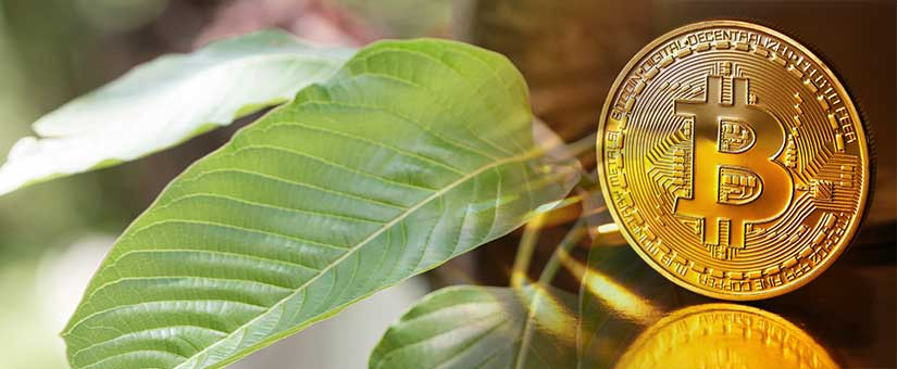 Can-you-get-Kratom-Capsules-using-Bitcoin