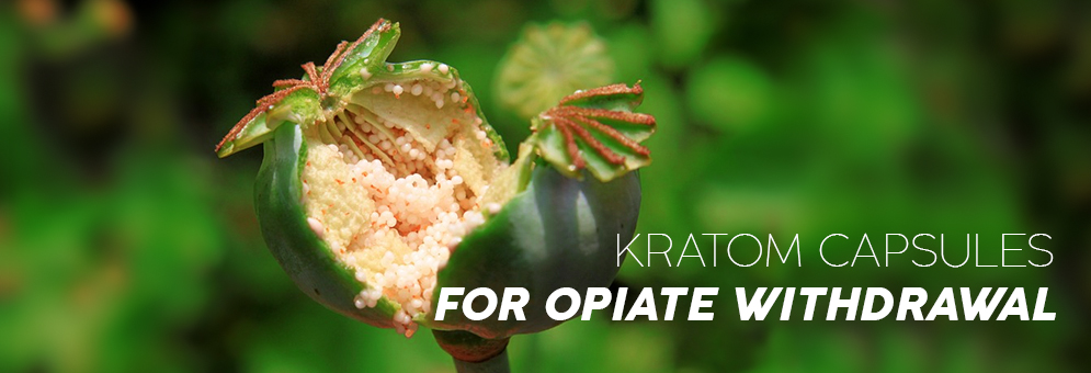 PURCHASE KRATOM CAPSULES FOR OPIATE WITHDRAWAL