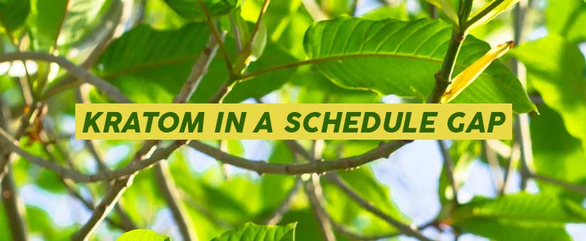 WHY-TO-CONSUME-KRATOM-IN-A-SCHEDULE-GAP